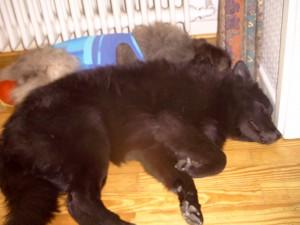 An Opi Otto gekuschelt einschlafen