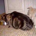 Der Beweis: Spitze dulden bekanntlich keine anderen Haustiere!