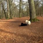 Spaziergang mit Gilla und Anton im Weißen Venn