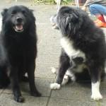 Beste Freunde - Tino und Pepper