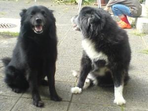 Tino und Pepper