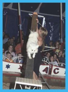 Circus Antoni