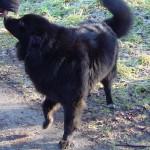 Gilla beim Spaziergang mit dem großen Bellini auf dem Scharpenacken