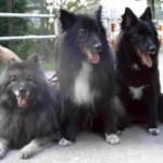 Otto, Griepto und Banja
