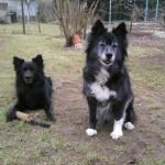 Tino und Pepper im Garten