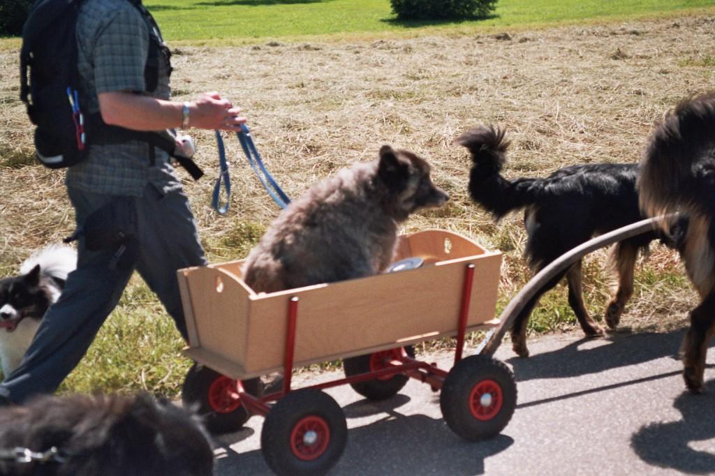 2 Howis ziehen den fast 18jährigen Otto beim Spitztreffen im eigens für ihn angefertigten Ottomobil