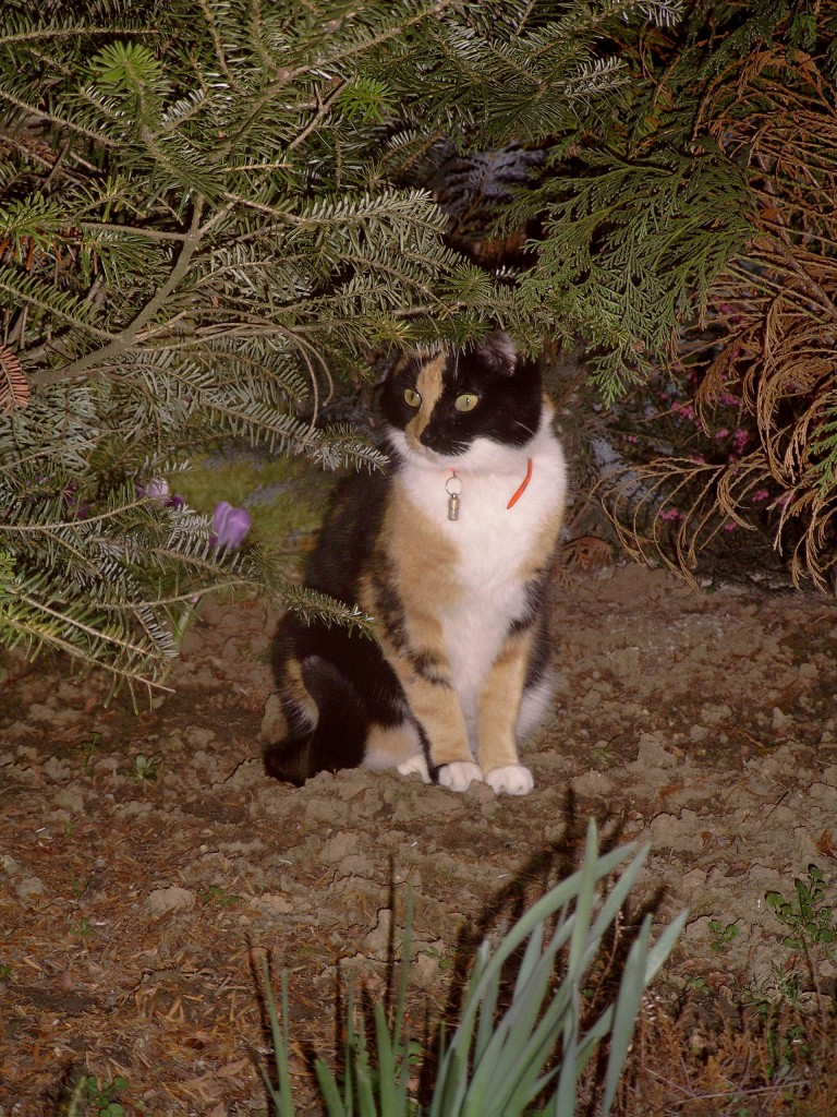 050322 52 Kitty