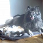 Kitty und Otto teilen sich einen Sonnenstrahl