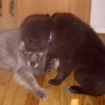 Altenpflegehelferin Gilla wäscht den greisen Otto
