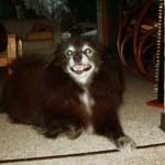 Das alte Süs-chen, mit 14 Jahren immer noch topfit!