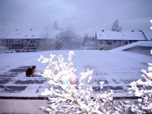 Kittys erster Winter