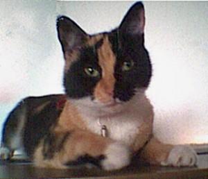 Kitty Katzinski