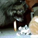 Otto passt auf, dass nicht zu viel Blödsinn gemacht wird.
