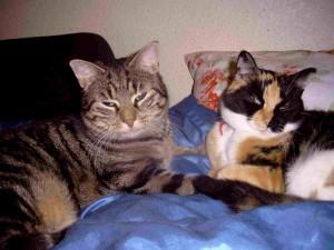 Richard und Kitty - eine ganz tiefe Katzenliebe