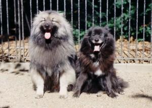 Otto und Susanne vor Hagenbecks Tierpark